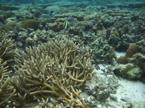A healthy coral reef on the Great Barrier Reef relies on countless symbiotic relationships between plants and animals. (Lady Elliot Island Eco Resort, Queensland)