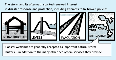 The storm and its aftermath sparked renewed interest in disaster response and protection, including attempts to fix broken policies. Coastal wetlands are generally accepted as important natural storm buffers-- in addition to the many other ecosystem services they provide.