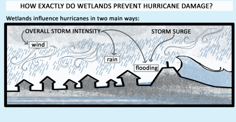 Wetlands ameliorate storm intensity and storm surge
