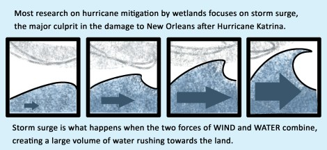 Most research on hurricane mitigation by wetlands focuses on storm surge, the major culprit in the damage to New Orleans after Hurricane Katrina. Storm surge is what happens when the two forces of WIND and WATER combine, creating a large volume of water rushing towards the land.