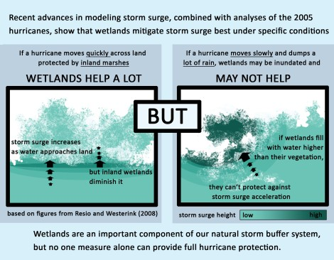 Recent advances show that wetlands mitigate storm surge best when a hurricane moves quickly across land protected by inland marshes, but are less helpful when hurricanes move slowly