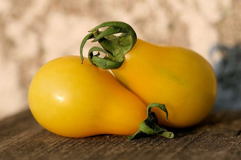 Some tomato shapes are due to ancient transposable element activity. Photo by Lori Erickson via Flickr.