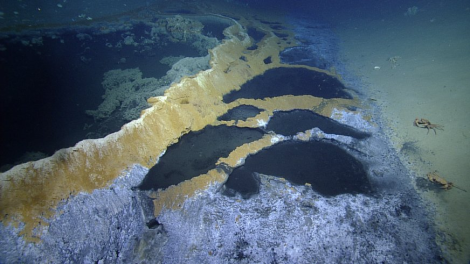 Brine pools in the Gulf of Mexico. Image via Nautilus Live.