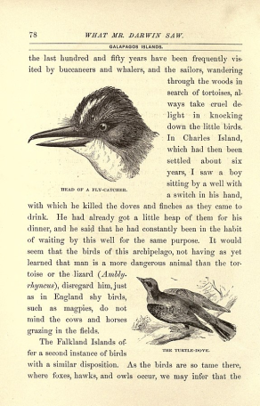 """Darwin included these sketches of birds from personal journals during his journey through the Galapagos in his book """"The Voyage of the Beagle"""""""