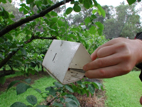 CSIRO_ScienceImage_2435_Using_Insect_Pheromones_Against_Insect_Infestation